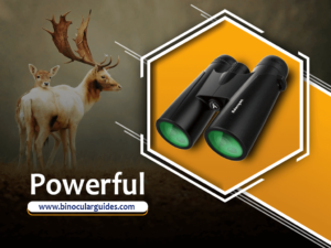 12x42 Powerful Binoculars – Best Rated Binoculars for Safari